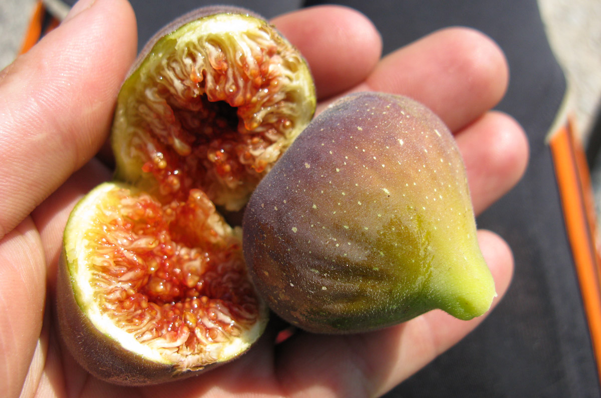 zrele fige