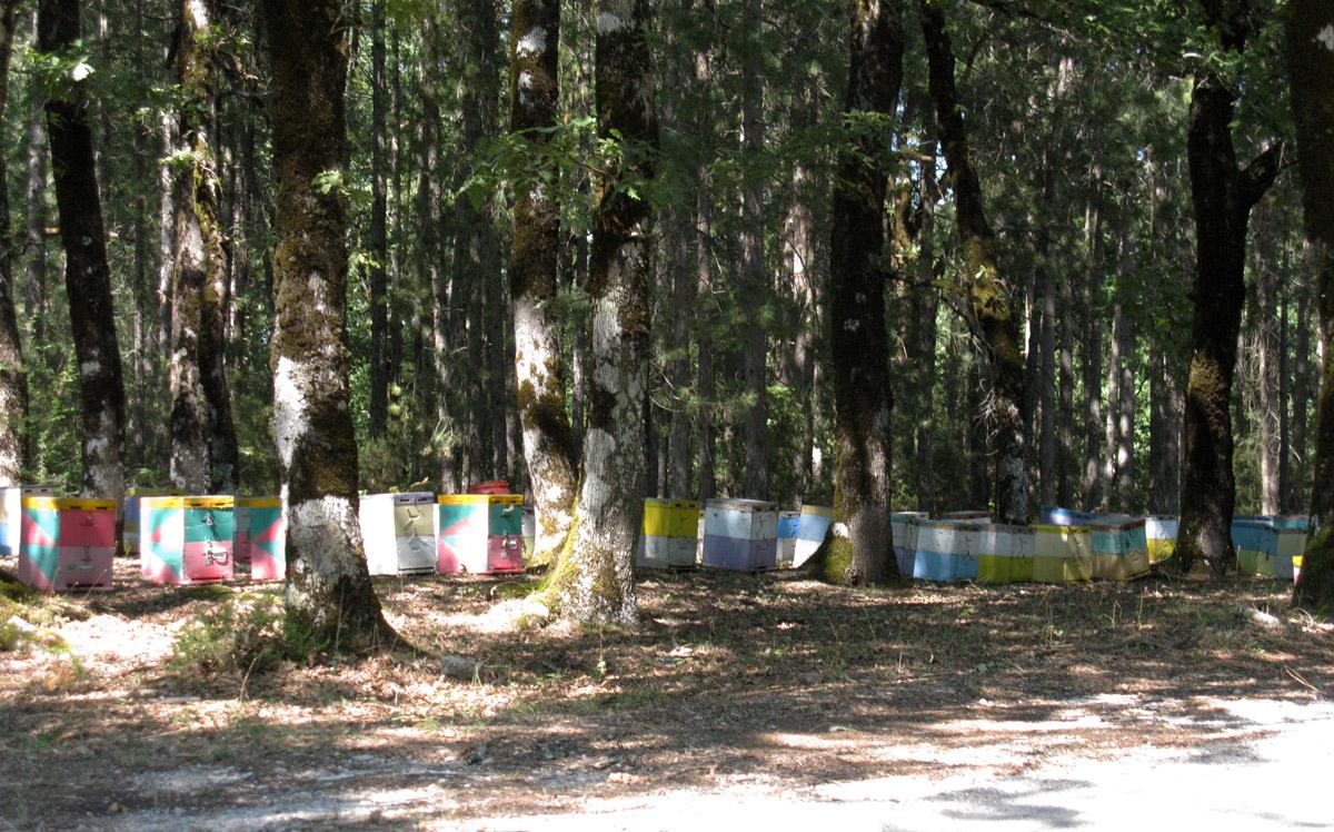 čebelnjaki v gozdu